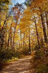 20111016-_DSC3129_web_publ.jpg (StanD70) Tags: autumn fall nc nikon fallcolor unitedstates foliage blueridgemountains vr linvillefalls lr3 f3556g linvilleriver 18105mm d7000 18105mmf3556gvr adobelightroom3 appleaperture3