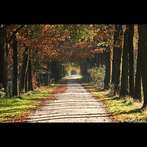 _tree_avenues