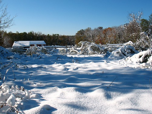 towards the meadow: Snowstorm of October 2011, New Jersey