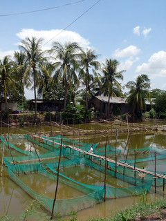 Fish Nursery in Kandal Province, Cambodia. Photo by O. Joffre, 2010