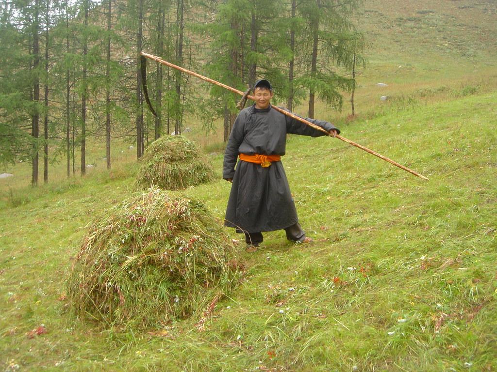 Coupe traditionnelle du foin pour faire un stoc hivernal, Sum de Onder-Ulaan (Bag d'Azarga), Arkhangaï, Mongolie
