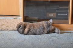 bunnies 11-10-2011_1071 (sensitivebunnyguy) Tags: bunnies