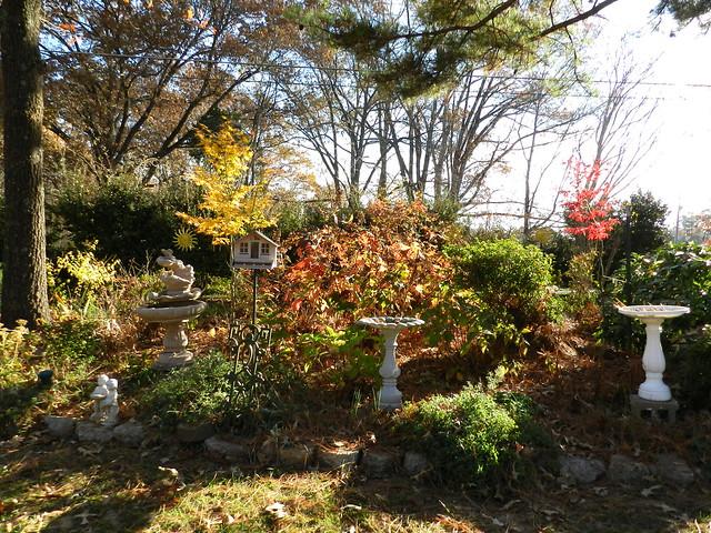 November Garden 128