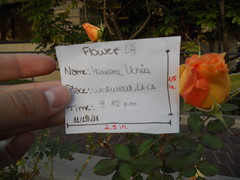 14 (marianauchoa2011) Tags: flres
