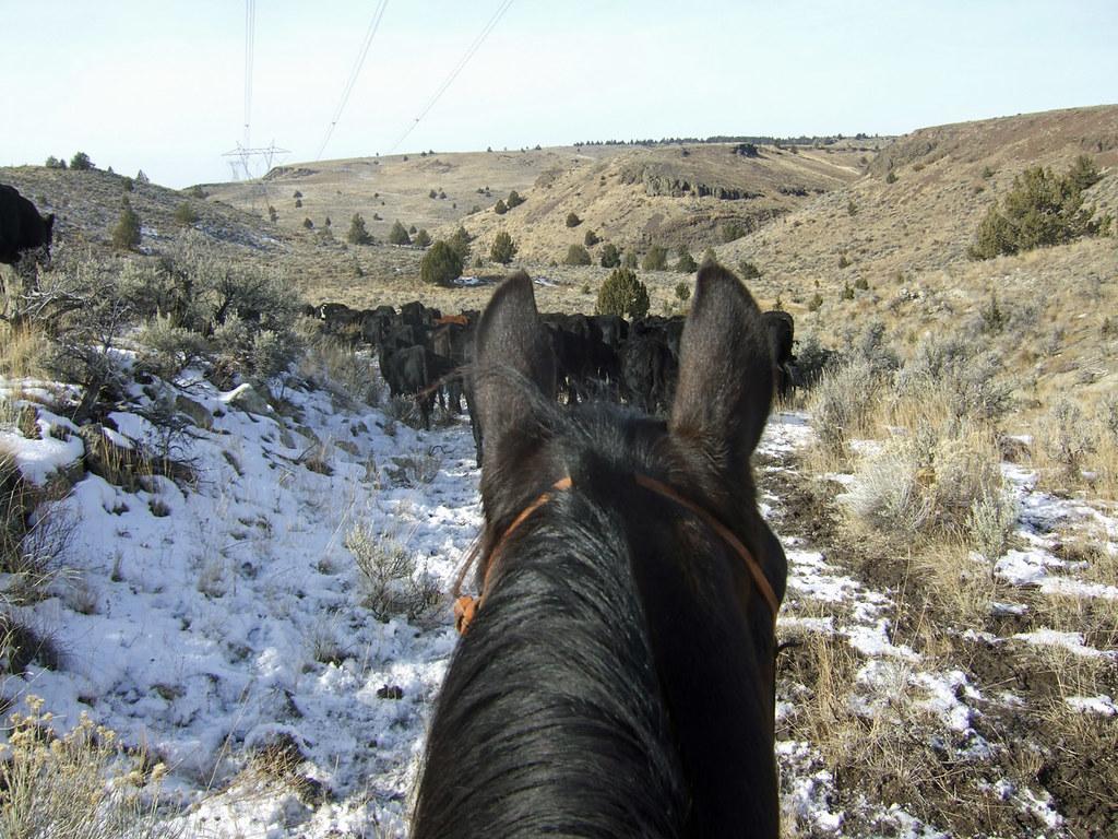 Gather & Trail-4