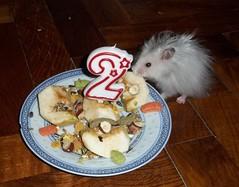 Chupitto 2nd Birthday/anniwersary