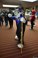 DSC_0725 (Exkhaniber) Tags: coyote fursuit 2011 anthrocon canid coyoty