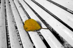 DESCANSO (ángel mateo) Tags: autumn españa white hoja blanco lines yellow leaf andalucía spain banco bank amarillo otoño almería líneas ángelmartínmateo ángelmateo villadevícar