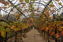 Grapes Berceau in Autumn (Foto Martien (thanks for over 2.000.000 views)) Tags: autumn holland fall netherlands dutch state herfst nederland tunnel villa niederlande berceau burcht landhuis najaar stins provincefriesland a550 loofgang jelsum dekemastate martienuiterweerd carlzeisssony1680 martienarnhem sonyalpha550 mygearandme mygearandmepremium martienholland mygearandmebronze mygearandmesilver mygearandmegold mygearandmeplatinum fotomartien formerstronghold
