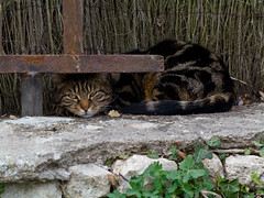 Yvre-le-Chtel (Pierre ESTEFFE Photo d'Art) Tags: france monument animal chat village pierre difice yvrelechtel loiret45 g1x