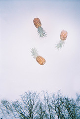 (katya mamadjanian) Tags: film fruit flash surreal disposable fertile pinapple pinapples