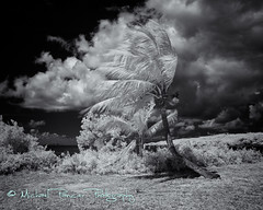 Tropical Paradise in IR (Michael Pancier Photography) Tags: ocean bw usa lighthouse clouds marina boats islands bay blackwhite florida miami palmtrees infrared fl nationalparks biscaynebay commercialphotography bocachita naturephotographer biscaynenationalpark infraredbw michaelpancierphotography landscapephotographer scenicflorida fineartphotographer michaelapancier wwwmichaelpancierphotographycom deepinfrared