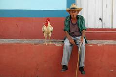 Trinidad. Earning a living (Juan C. Garca Lorenzo) Tags: street blue red man latinamerica azul gallo calle rojo nikon nikond70 ngc cuba trinidad rooster caribbean hombre sanctispiritus caribe cockerel amricalatina latinoamrica antillas theamericas