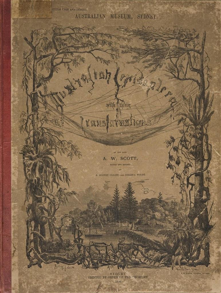 Australian Lepidoptera bookcover