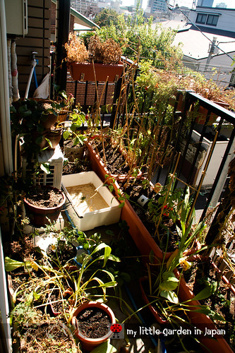 my-little-garden-in-japan-september-2011-2
