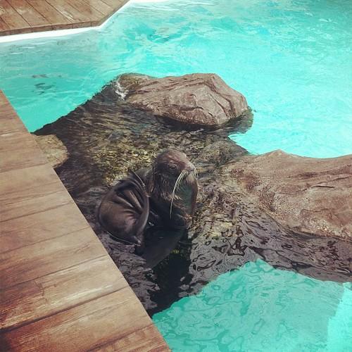 Big seal