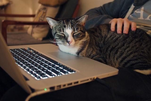 Mac cat