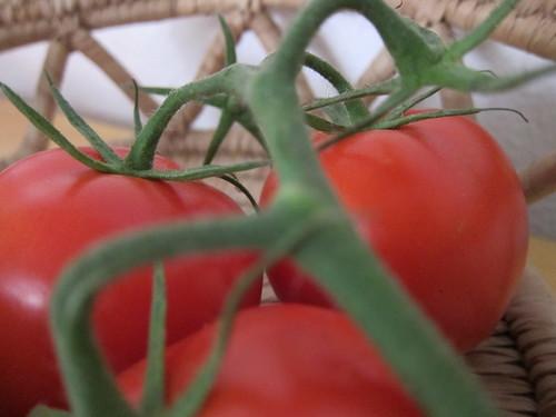 tomaten tomatoes pomodori