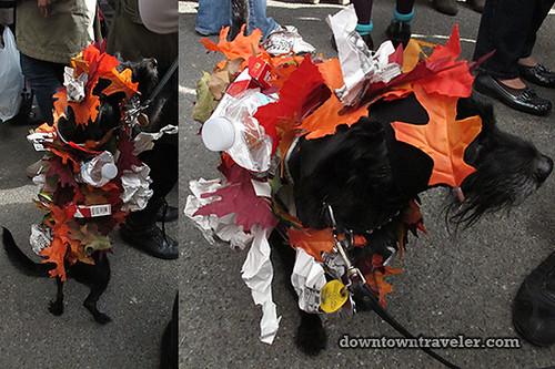Tompkins Park Halloween Dog Parade_Poodle Chihuahua mix as trash