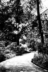 green corridor in B/W (wiwin.wr) Tags: forest canon eos walk maribaya 2011 juanda naturegreen efs55250mmf456is 1000d parknorthern bandungbeauty corridorpath