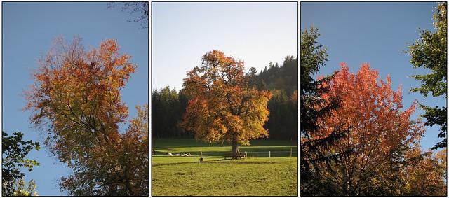 Herbstbilder Bergflue tour