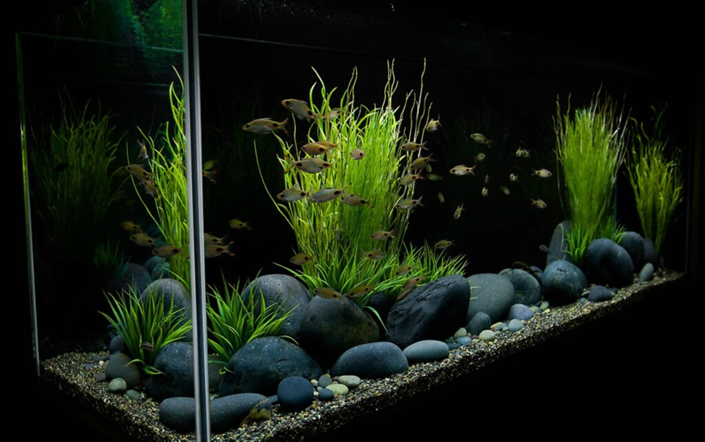 Large River Stones Mexican Rive Pebbles The Planted Tank Forum