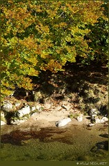 Joile Dourbie / Cute Dourbie (Michel Seguret thanks you all for + 7.700.000 view) Tags: autumn trees tree fall nature forest automne season arbol nikon herbst natur natura automn bosque otoo d200 wald autunno floresta arbre baum languedoc fort gard temporada foresta smrgsbord saison arbols cvennes stagione aigoual autonno dragongoldaward arrbres michelseguret selvabosque