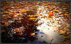 End Of October (Mark Faviell Photos) Tags: autumn mountain reflection fall water pool grave graveyard leaves vancouver dead october bc view cemetary