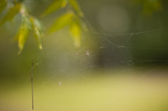 Spider and its net (mr_i) Tags: green nature 50mm spider nikon bokeh harmony nikkor kuantan d90