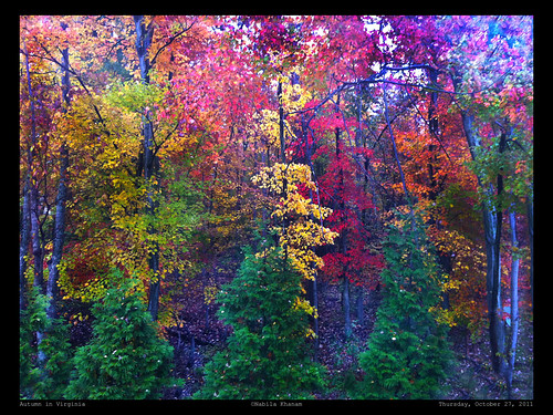 Autumn in Virginia - A Feast for the Eyes and the Soul ! by nabila4art