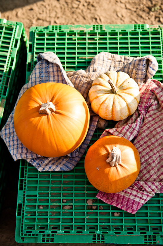 Clean pumpkins