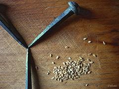 Y & seeds (Franco DAlbao) Tags: stilllife composition lumix iron seeds nails bodegn passion subconsciente clavos hierro composicin subconcious semillas pasin leicalens dalbao francodalbao