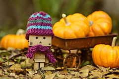 Danbo King of the Pumpkins! (.OhSoBoHo) Tags: autumn copyright cute fall love halloween hat leaves japan toy japanese gold robot sweet small pumpkins mini kawaii pearl cuteness wooly yotsuba danbo woolies minipumpkins danboard  danbolove ohsoboho amazoncardboardrobot danboatthepumpkinpatch danboinhiswoolies iknithimanewhatscarffortheautumn danbohat