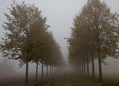 autunno tra nebbie e colori (mat56.) Tags: autumn trees colors misty fog alberi landscapes day nebbia autunno colori paesaggi lombardia fila lodi pianura lodigiano padana mat56 mygearandme