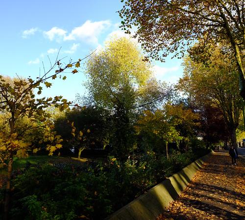 University Leaves