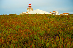 Cactus carpet (NunoVicente) Tags: ocean sea lighthouse beach portugal nature mar lisboa lisbon natureza sintra atlantic farol lanscape oceano atlantico waterscape ilustrarportugal