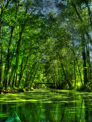 Withlacoochee River Channel, Florida (ded_ch) Tags: trees plants color green water river intense kayak florida channel withlacoochee