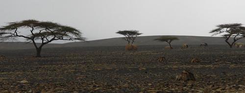 Foto Kenya - Etiopia e Kenya - La grande traversata
