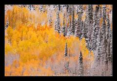 The Struggle (Koveh Photography) Tags: travel autumn trees vacation usa lake snow fall beauty digital canon eos october colorado dramatic co aspens aspen 70200 struggle ridgeway ouray crystallake landscapephotography ef70200 nohdr 5dmkii kovehphotography koveh