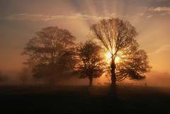 Tree Burst (fidget65) Tags: morning trees sky sun color silhouette fog dawn frost shropshire cattle ligt shade rays burst naturesfinest attinghampark sunsetsandsunrisesgold