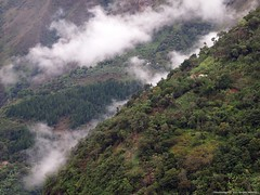 Vereda Sirgua Finca Cafetera (Coffee Farm) (Ivan Mauricio Agudelo Velasquez) Tags: cloud coffee cafe colombia farm platano bosque nube antioquia finca cafetal sonson ladera