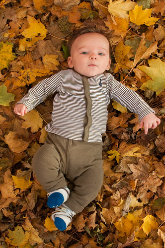 Waylon in the leaves