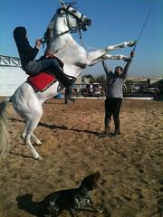 Horse Riding @training arena