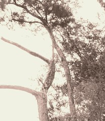 a way of seeing (LauraSorrells) Tags: trees painterly monochrome october peace god joy grace retreat overexposed reach mystic 2012 otherworldly fullness monasteryoftheholyspirit julianofnorwich allshallbewell