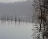 Dawn of the Ducks (Collin Key (travelling)) Tags: morning winter mist lake reflection reed nature germany dawn ducks tranquility deu schleswigholstein mölln northgermany herzogtumlauenburg lüttauersee collinkey oracope