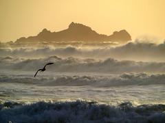 The Ninth Wave / Девятый вал (Cepreu K) Tags: pacificocean ocean wave seagull bird fbdg thepinnaclehof tphofweek151 kanchenjungachallengewinner flickrchallengegroup flickrchallengewinner thechallengefactory friendlychallengessweep mpt528 matchpointwinner