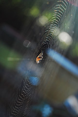 Day 240/365 (spider + bokeh) (FaithBishop) Tags: seattle spider bokeh web spiderweb porch backlit spiderinweb 365project
