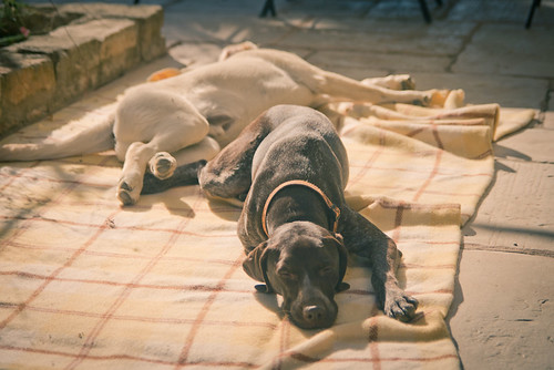 Nina & Yogi font la sieste