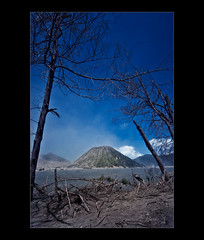 Effects of the Mt. Bromo eruption (moonstruck777) Tags: ruins deadtrees eruptionmtbromonikonmoonstruck777indonesia