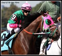 Xodo (EVENTOF THE YEAR PHOTOS) Tags: horseracing thoroughbreds belmontpark xodo tapizar